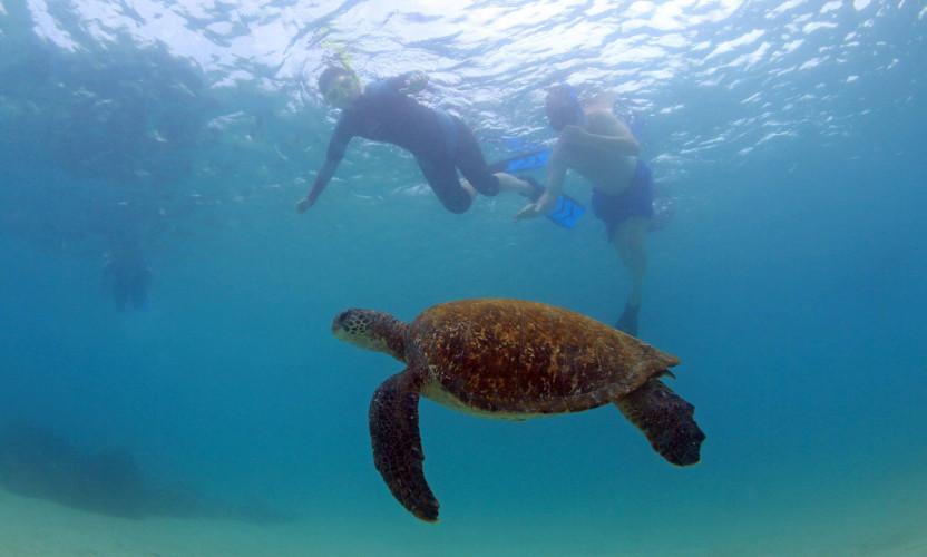 Intern Work - Snorkel with Sea Turtles