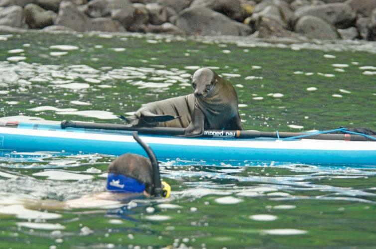 Sea Lion SUP