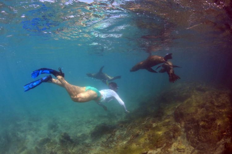 Visit Galapagos in 2020