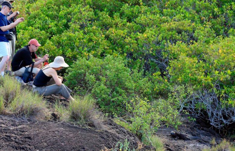 safe distance from marine iguana - sustainable travel