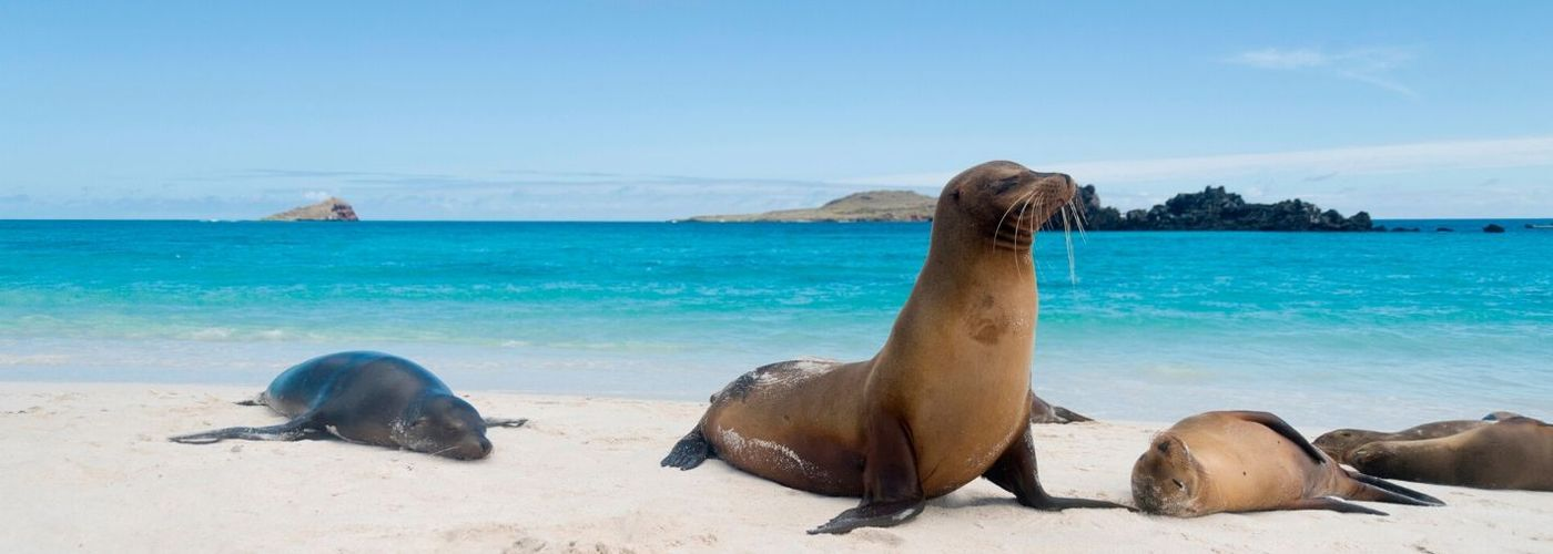 Sea Lions on a Beach in 2019 for a Galapagos Christmas Tour