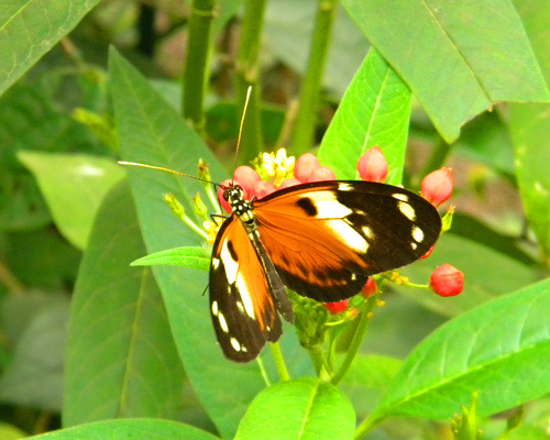 Mindo Butterfly Farm