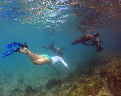 Snorkelling in the Galapagos