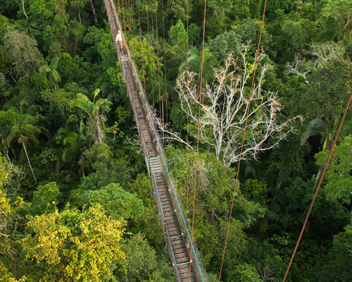 Amazon Canopy Walkway