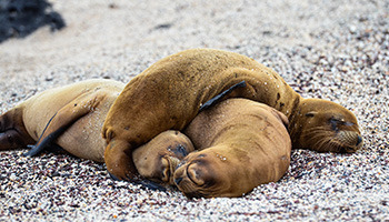 6-day Galapagos Land Tour